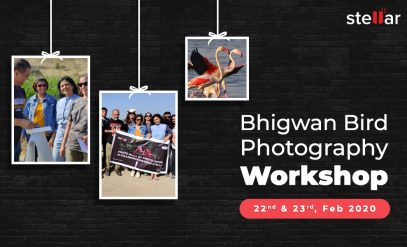 bhigwan-bird-photography-workshop-in-collaboration-with-Stellar-data-recovery