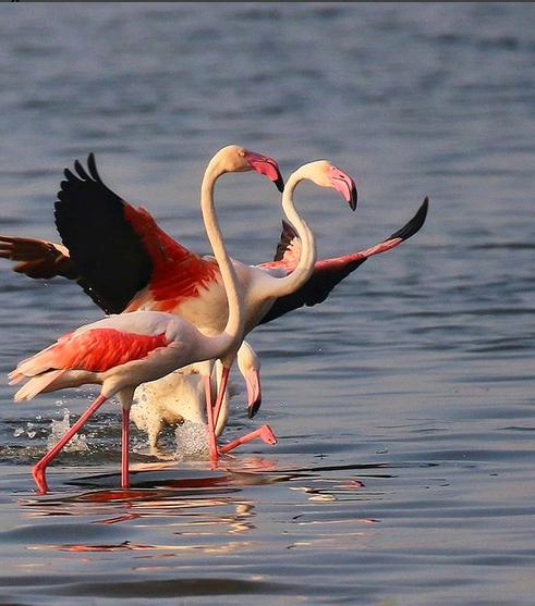 bigwan-bird-sanctuary